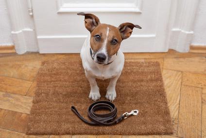 Hund alleine lassen – Tipps & Tricks gegen die Einsamkeit