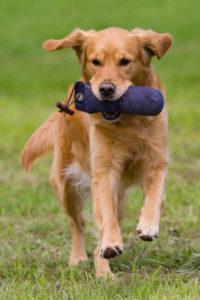 hund apportieren beibringen