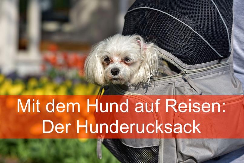 Ein Hunderucksack macht Sinn