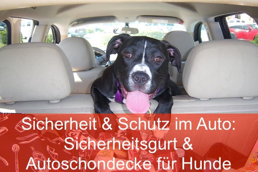 Hund im Auto nur mit Hundedecke und Sicherheitsgurt